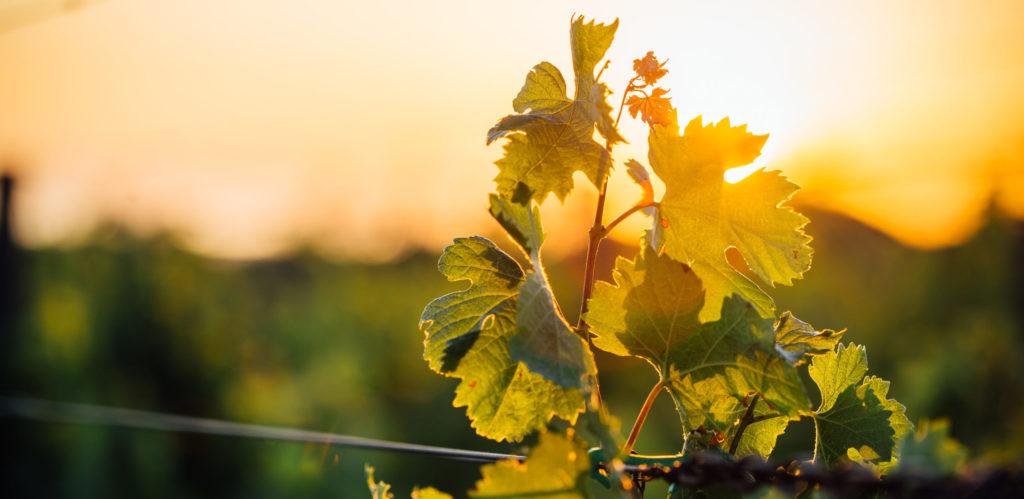 Ernest epicerie Lausanne take away traiteur coffret cadeau vigne vin